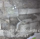 Interviste/FIORIO_2